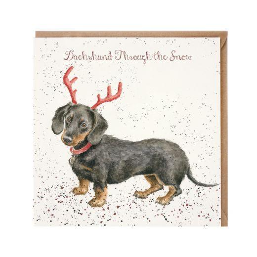 dashound through the snow